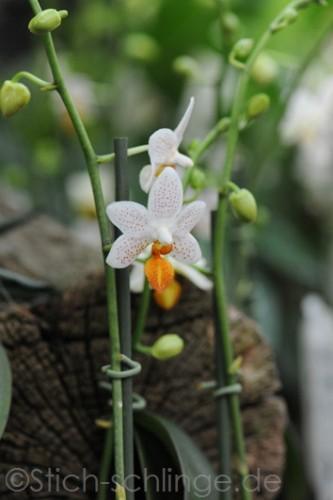 Orchideen2015 02 02