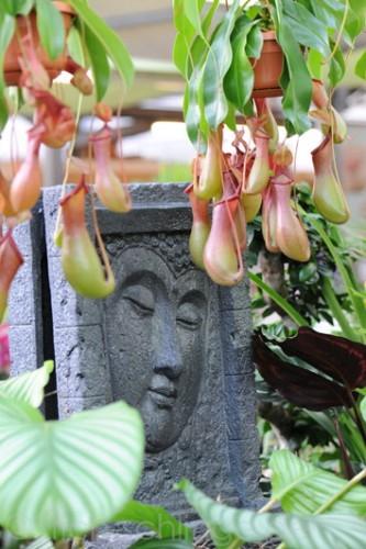 Orchideen2015 03 03