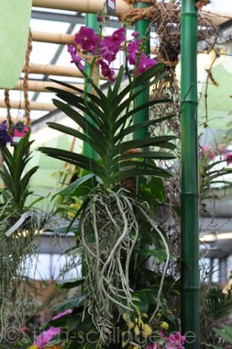 Orchideen2015 04 04