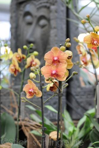 Orchideen2015 06 06