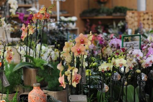 Orchideen2015 11 11