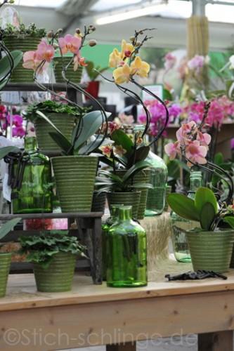 Orchideen2015 12 12
