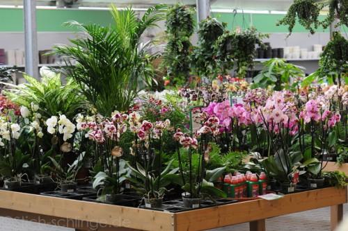 Orchideen2015 13 13