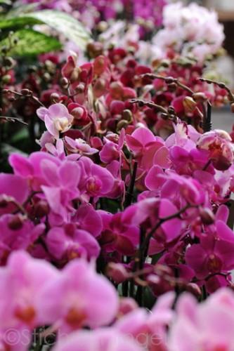 Orchideen2015 14 14