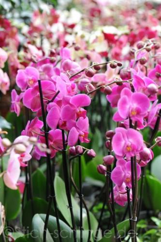 Orchideen2015 15 15