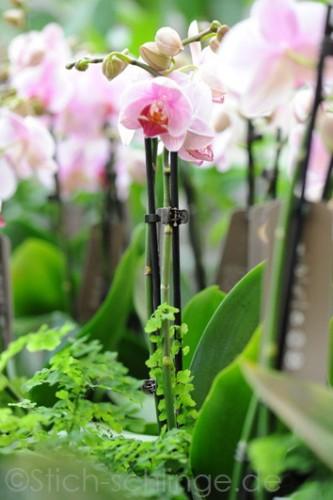 Orchideen2015 16 16