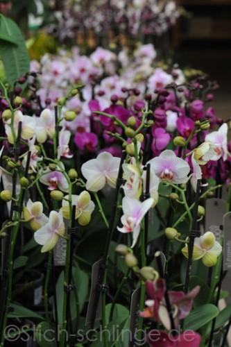 Orchideen2015 18 18