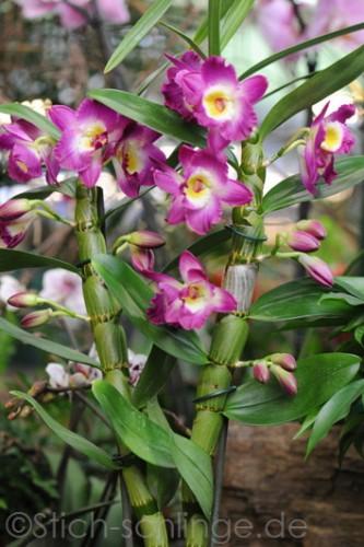 Orchideen2015 19 19