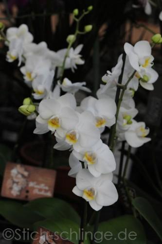 Orchideen2015 23 23