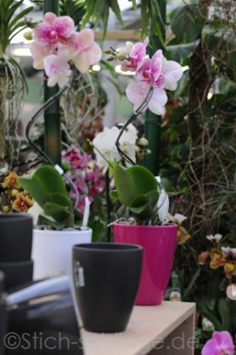 Orchideen2015 24 24