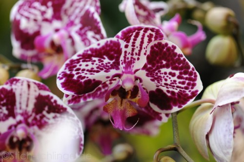 Orchideen2015 29 29